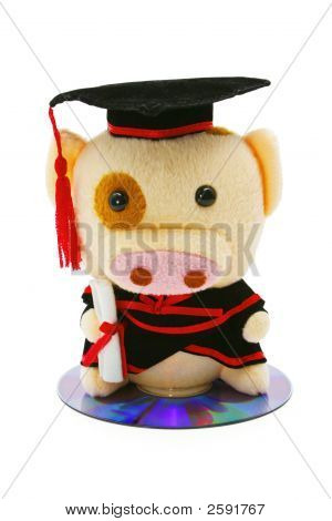 Piggy In Graduation Gown Sitting On Cd