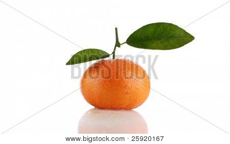 honey mandarin tangerine isolated on white with room for your text or images