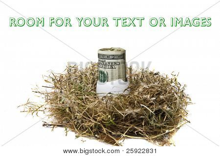 Financial Nest Egg concept $100.00 (one hundred dollar bills) rolled up inside a bird egg inside a bird nest