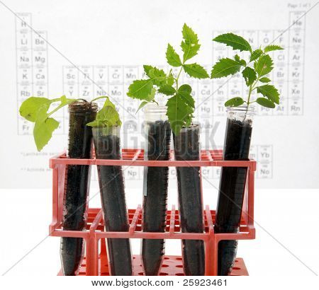 Botanical research, plants growing in test tubes in a research laboratory