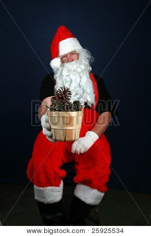 Santa Claus holds pine cones while sitting in a chair