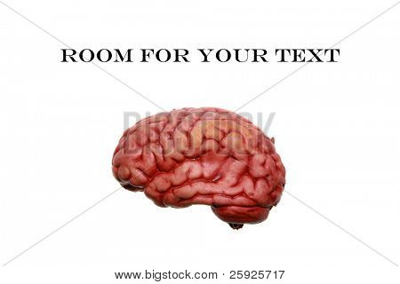 A Human brain isolated on white, with room for your text or thoughts