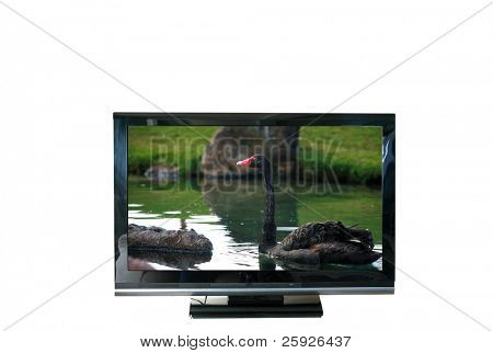 a flat screen tv with a photo of a black swan in the picture isolated on white