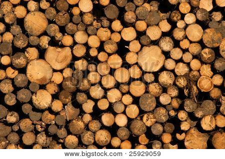 Pile of logs in the High Tatras, Slovakia