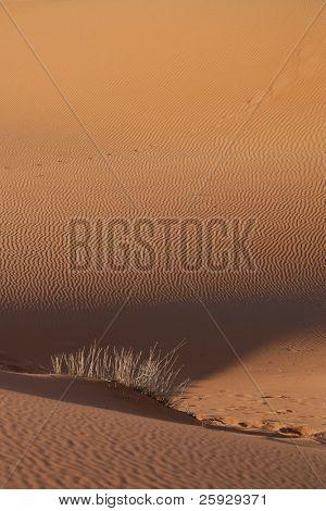 Sand dunes of Erg Chebbi in the Sahara Desert near Merzouga, Morocco