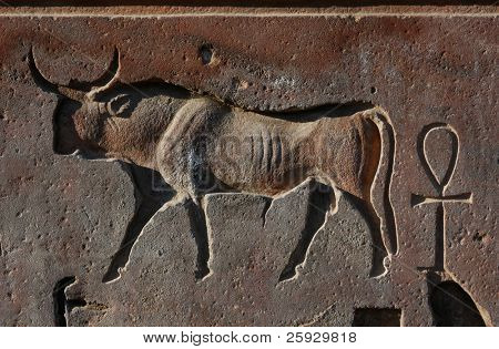 Egyptian relief wiht a bull and an ankh, the symbol of life, from Luxor Temple (Thebes), Egypt