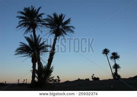 Palm trees in the Sahara Desert, Morocco, at sunrise