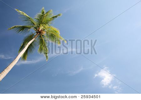 Palm tree with blue sky background