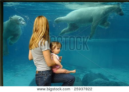 Mother and daughter watching polar bears at the zoo.