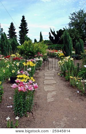 Beautiful  garden with daylily, stone path and many plant species