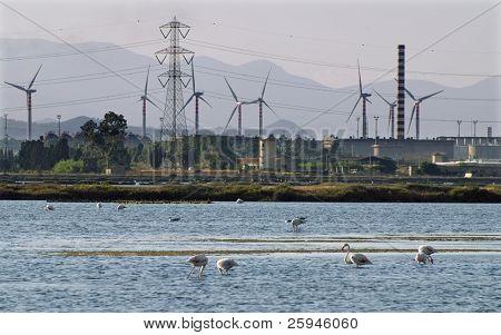 Ambiente de la industria vs - fábrica de la industria pesada se encuentra justo cerca del lago con flamencos en Sar