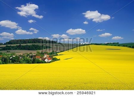 Beautiful rural landscape with blooming rapeseed, village and a blue sky