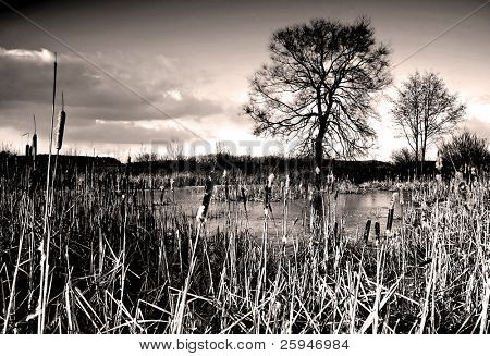 Romantic landscape of frozen lake with bulrush, tree in the back and a dramatic sky with clouds - colored infrared photo