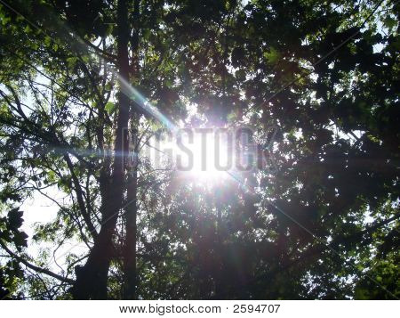 Sun In The Tree