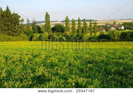 Beautiful spring landscape with meadow full of yellow flowers