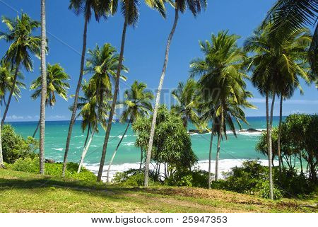 Beautiful palm groove and turquoise tropical sea
