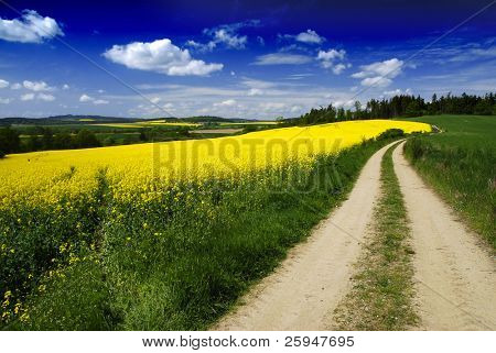 Dirty road to the forest in the beautiful rural landscape of young wheat and rapeseed fields