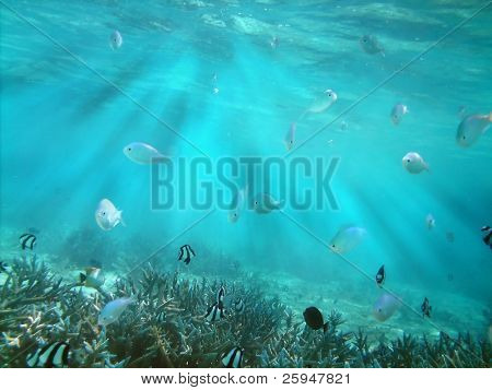 Tropical fish kingdom - coral reef in the maldivian sea and rays of light