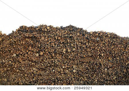 Big forest industry log pile.