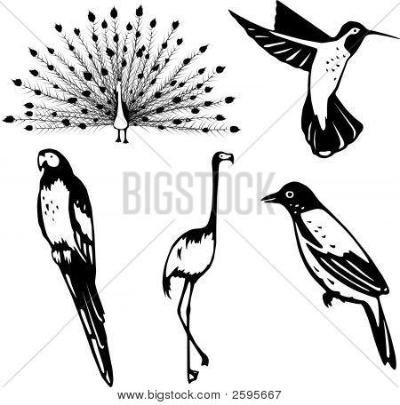 Pretty_Birds