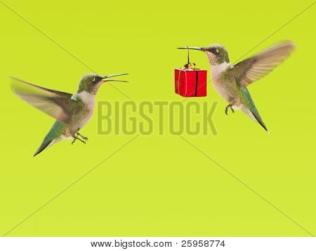 Hummingbird carrying a gift to another hummingbird, a background with copy space