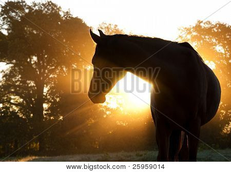 Beautiful Arabian horse silhouette against morning sun shining through haze and trees