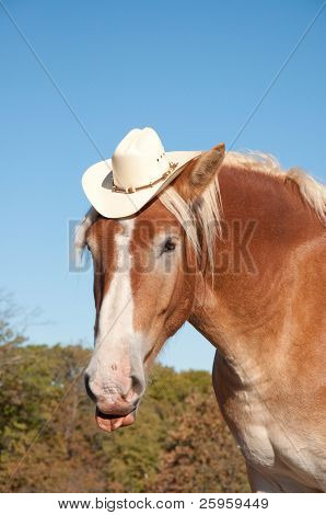 Comical image of a handsome Belgian Draft horse wearing a cowboy hat, sticking his tongue out