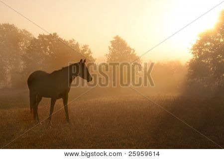 Silhouette of a beautiful Arabian horse against sunrise in heavy fog, in rich sepia tone