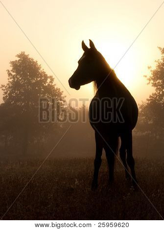 Refined Arabian horse in heavy fog against rising sun, in rich sepia tone