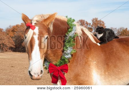 Close up image of a large Belgian Draft horse wearing a Christmas wreath around his neck, with his tiny kitty cat friend riding on his back