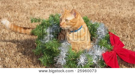 Red tabby kitty cat in a Christmas wreath with a red bow and silver tinsel