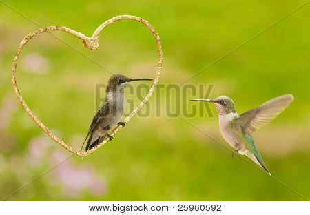 Two hummingbirds with a golden heart - a Valentine design on a green garden background