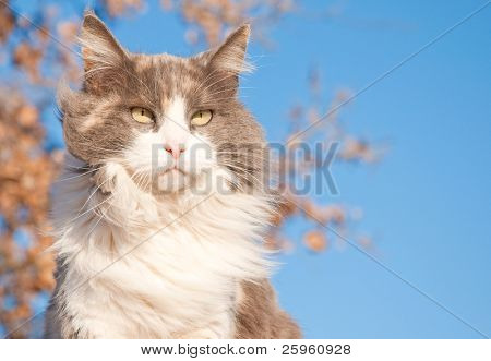 A serious looking diluted calico cat against a tree with dry leaves and blue sky