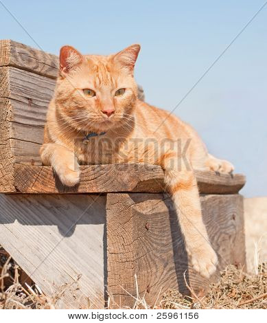 Adorable red tabby cat resting on a wooden step against clear blue sky