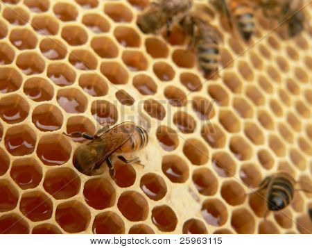 Arbeiten Bienen
