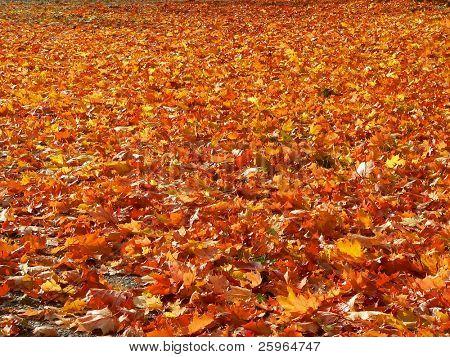 Boden bedeckt mit vor kurzem abgefallenen Blättern