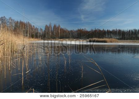 Frozen rushy lake on a clear sunny winter day