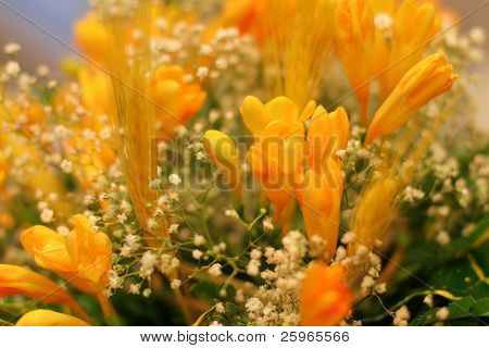 Seft focused bouquet of spring yellow Freesia, close up