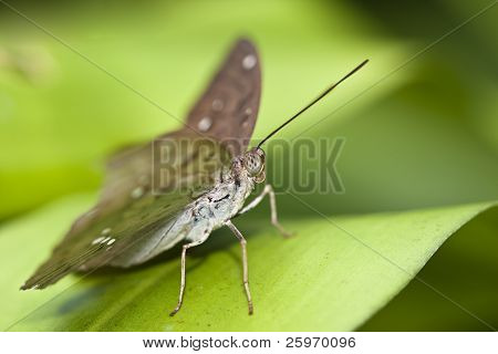 Butterfly Sitting On A Leaf