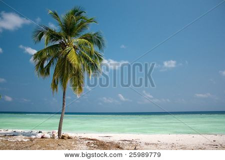 Island Paradise - Palm tree hanging over a sandy white beach with stunning turquoise waters