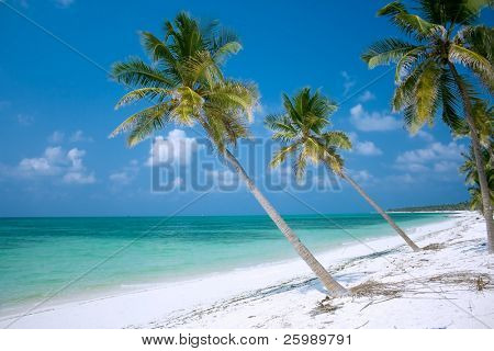 Island Paradise - Palm trees hanging over a sandy white beach with stunning turquoise waters