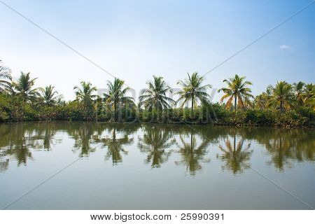 Palms jungle of backwaters , southern Kerala, India