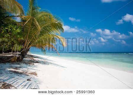 Island Paradise - Palm trees hanging over a sandy white beach with stunning turquoise waters and white clouds against blue sky