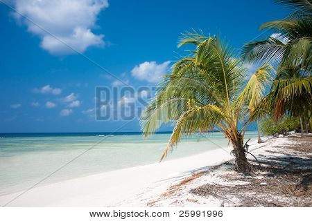 Tropical Island Paradise - Palm trees hanging over a sandy white beach with stunning turquoise waters and white clouds against blue sky