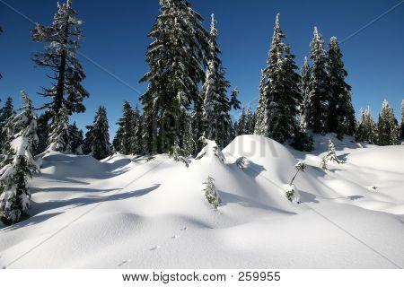 Cobertor de neve
