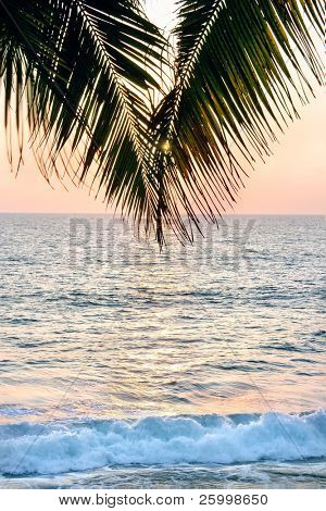Beautiful shot of a palm tree in front of the sunset in south-India .Colours are very hot and soft. Sun is reflecting on the ocean. Shallow depth of field.