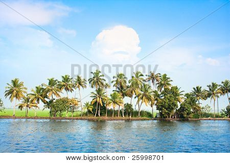 Coconut tress along the backwaters of Kerala, India.