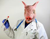 picture of the mexican swine flu  - A Doctor in a Pig Mask holds a large cooking thermometer representing the Mexican Swine Flu Pandemic - JPG