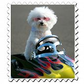 Bichon Frise stamp in a generic childs pedal car