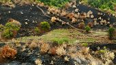 Aerial. Scorched Earth Landscape After A Fire. poster